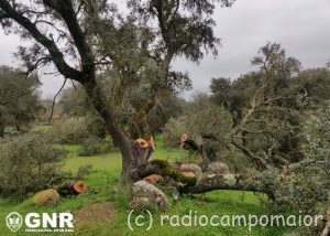 GNR Portalegre - Azinheiras_2