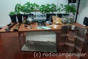 GNR Portalegre - Apreensão cannabis Campo Maior